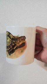 ぶりくら オリジナルマグカップ(トウブハコガメ)